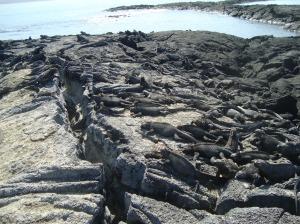 Galapagos 422