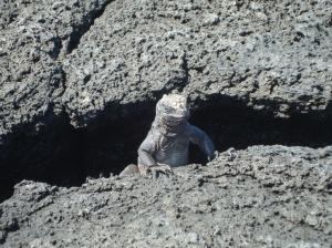 Galapagos 477