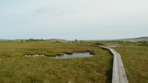 Studio across the marsh