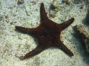 Sparkly sea star